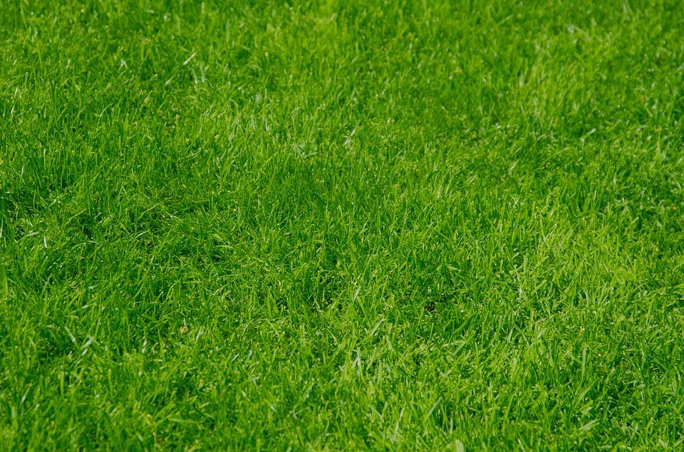 Standortgutachten für Gartengestaltung